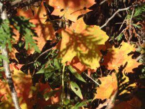 Linda_Babulic_autumn